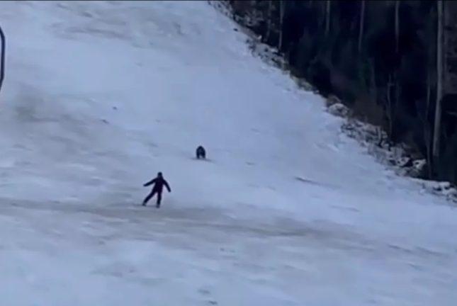 """شاهد .. فيديو يحبس الأنفاس لـ """"دب"""" يطارد متزلج على الجليد"""