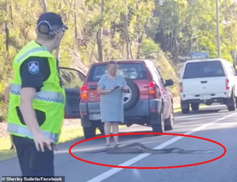 بالفيديو .. شاهد ما فعله ثعبان على أحد الطرق بأستراليا