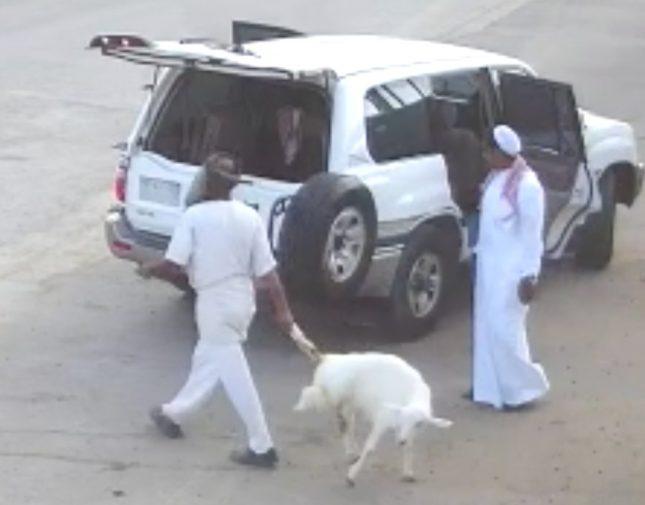 شاهد : لصان يخدعان عامل ويسرقان خروف بعدما وضعه في صندوق السيارة !